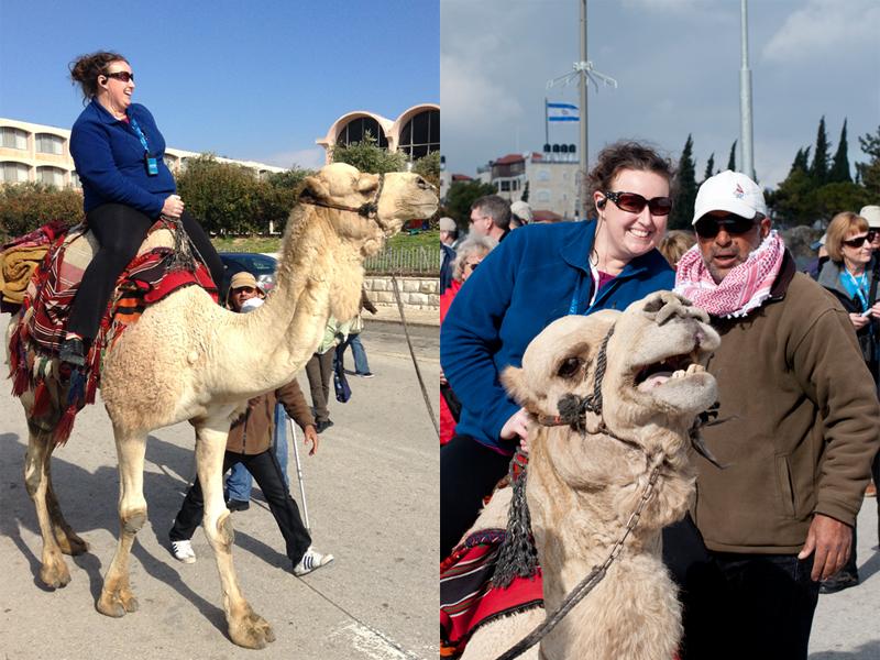 camelridesmall