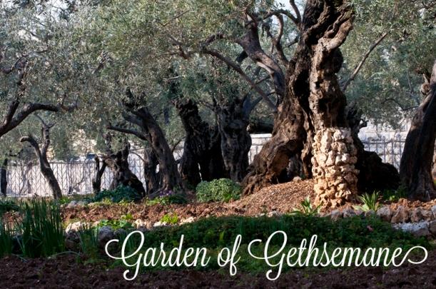 gardengethsemanesmll